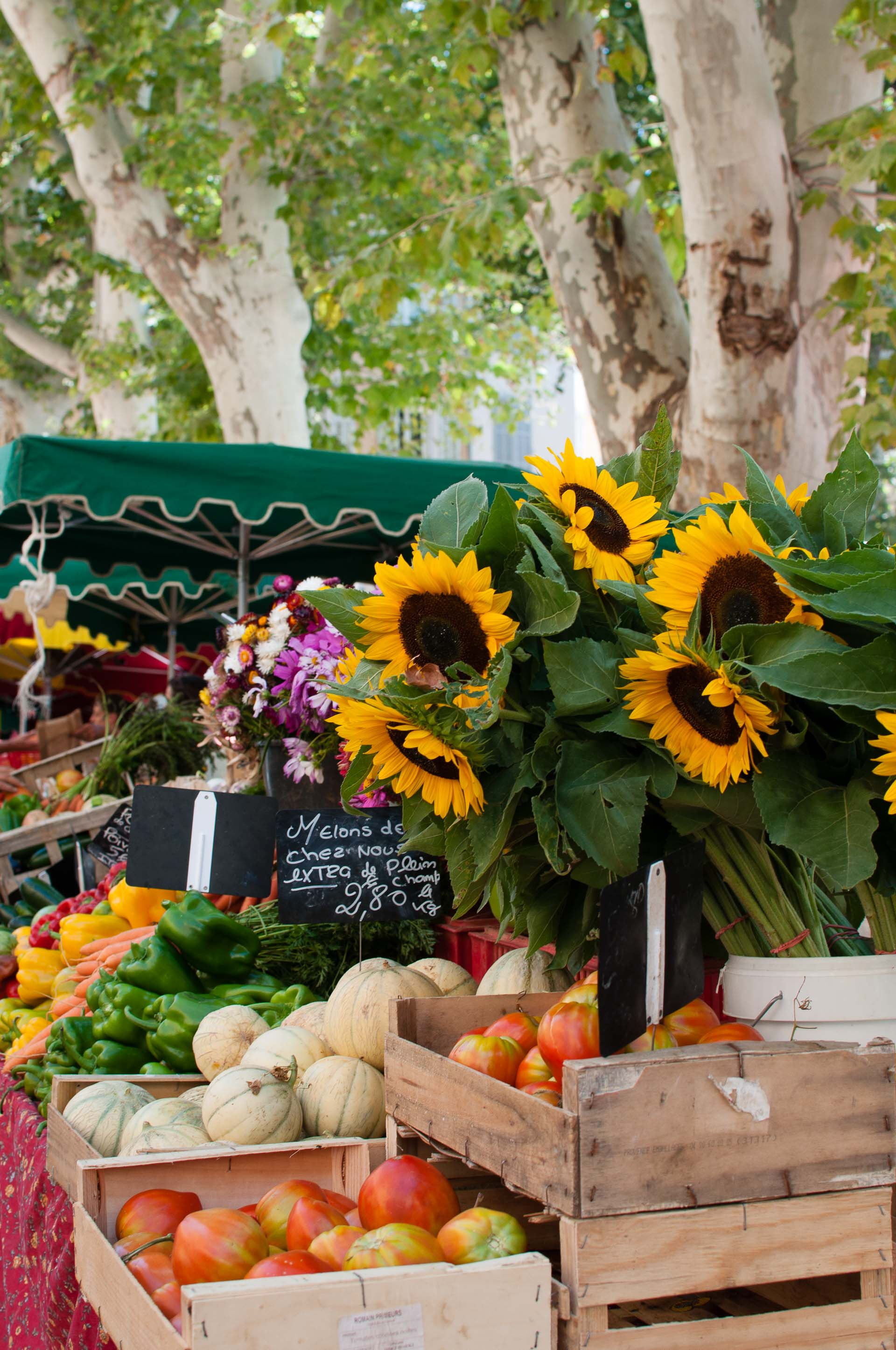 Fiori al mercato di Aix en Provence