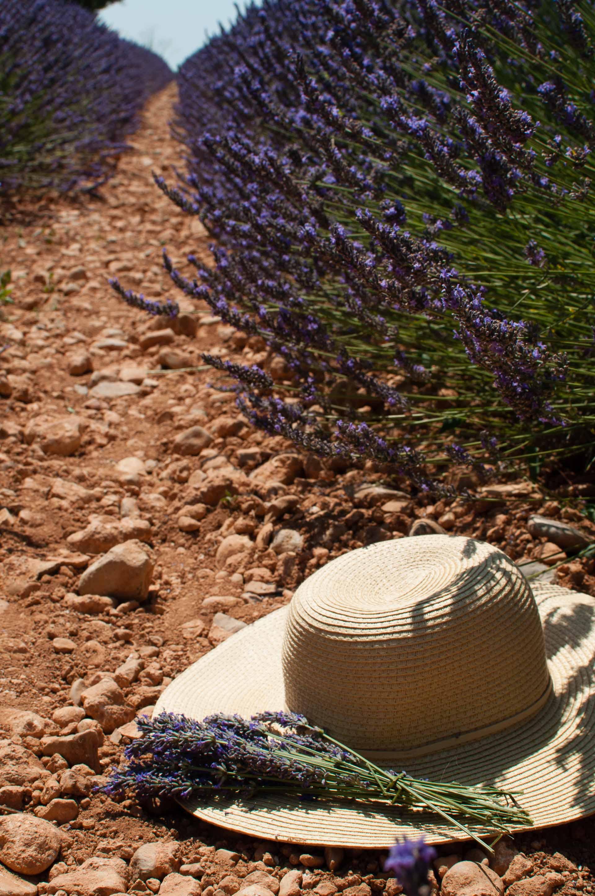 Cappello campo di lavanda Provenza